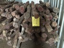 Red Sandalwood (Pterocarpus santalinus) Logs  新加坡拍卖会 – 紫檀原木